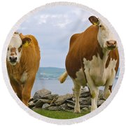 Cows Round Beach Towel by Terry Whittaker