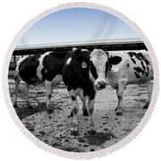 Cows Three In One Round Beach Towel