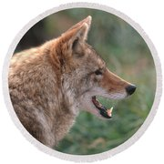 Coyote Round Beach Towel