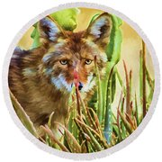 Coyote In The Aloe Round Beach Towel