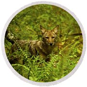 Coyote Of The Woods Round Beach Towel