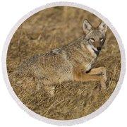 Coyote Running Round Beach Towel