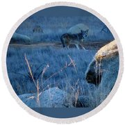 Coyote Wild Round Beach Towel