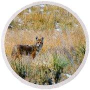 Coyotes Round Beach Towel