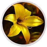 Cozy Yellow Daylily Round Beach Towel