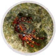 Crab In Cozumel Round Beach Towel