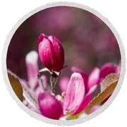 Crabapple Bud Round Beach Towel