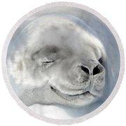 Crabeater Seal Round Beach Towel