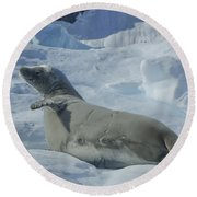 Crabeater Seal On An Iceberg Round Beach Towel