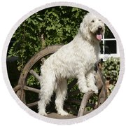 Cream Labradoodle On Wooden Chair Round Beach Towel