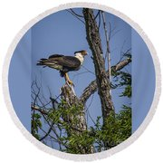 Crested Caracara Round Beach Towel