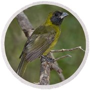Crimson-collared Grosbeak Round Beach Towel