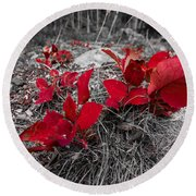 Crimson Foliage Round Beach Towel
