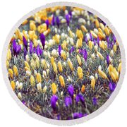 Crocus Field Round Beach Towel