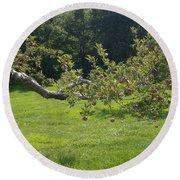 Crooked Apple Tree Round Beach Towel