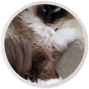 Crossed Paws Round Beach Towel