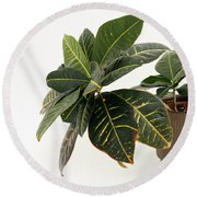 Croton Houseplant Round Beach Towel
