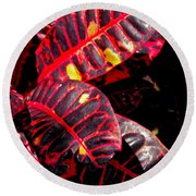 Croton Leaves In Black And Red Round Beach Towel