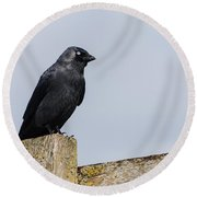 Crow Perched On A Fence Round Beach Towel