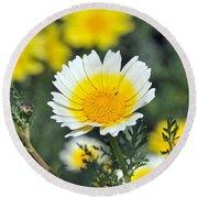 Crown Daisy Flower Round Beach Towel by George Atsametakis