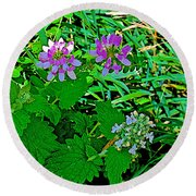 Crown Vetch And Catnip In Pipestone National Monument-minnesota Round Beach Towel