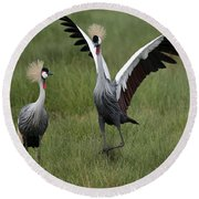 Crowned Cane Courtship Display Round Beach Towel