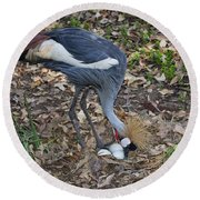 Crowned Crane And Eggs Round Beach Towel