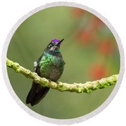Crowned Hummingbird Round Beach Towel