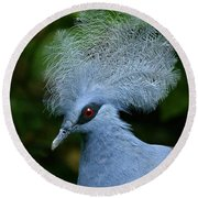 Crowned Pigeon Goura Cristata, Bali Round Beach Towel