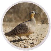 Crowned Sandgrouse Pterocles Coronatus Round Beach Towel
