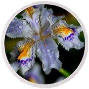Crying Fringed Iris-iris Japonica Round Beach Towel