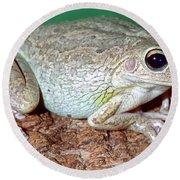 Cuban Tree Frog Osteopilus Round Beach Towel