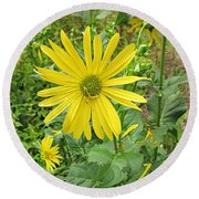 Cup Plant Blooms Round Beach Towel