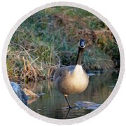 Curious Canadian Goose Round Beach Towel
