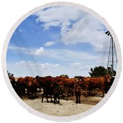 Curious Cows Round Beach Towel