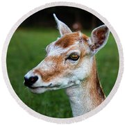 Curious Doe Round Beach Towel by Mariola Bitner