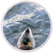 Curious Duck Round Beach Towel