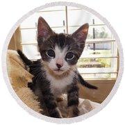 Curious Kitten Round Beach Towel