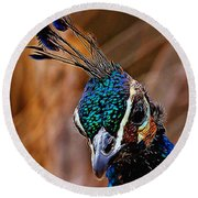 Curious Peacock Digital Art Round Beach Towel