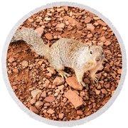 Curious Squirrel 2 Round Beach Towel