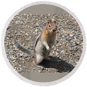 Curious Visitor Round Beach Towel