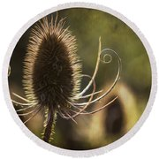 Curly And Spiky. Round Beach Towel