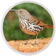 Curvedbill Thrasher With Grub Round Beach Towel