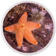 Cushion Winged Sea Star Round Beach Towel