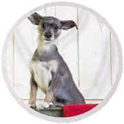 Cute Dog Washtub Round Beach Towel