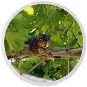 Cute Fuzzy Squirrel In Tree Round Beach Towel