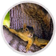 Cute Fuzzy Squirrel In Tree Near Garden Round Beach Towel