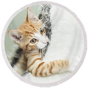 Cute Ginger Kitten In Igloo Round Beach Towel