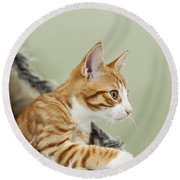Cute Ginger Kitten On The Loookout Round Beach Towel