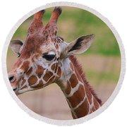 Cute Giraffe Portrait  Round Beach Towel
